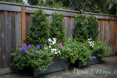 Betsy's Blooms container plantings_0773