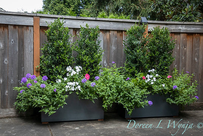 Betsy's Blooms container plantings_0771