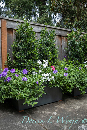 Betsy's Blooms container plantings_0772
