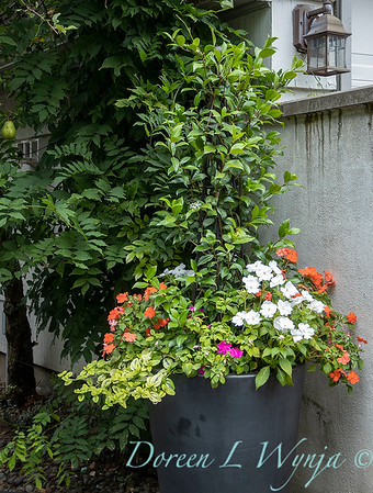 Betsy's Blooms container plantings_0769