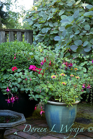 Betsy's Blooms container plantings_0742
