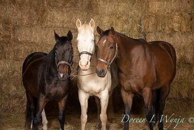 Horse family portrait_127