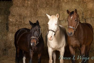 Horse family portrait_123