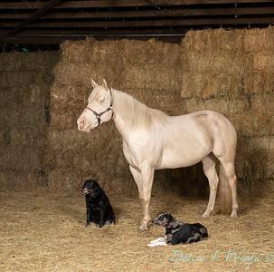 Horse family portrait_138