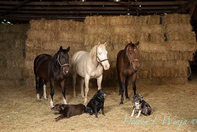 Horse family portrait_110