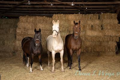 Horse family portrait_124