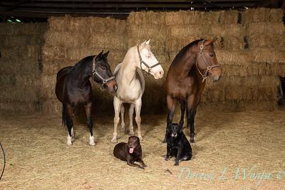 Horse family portrait_118