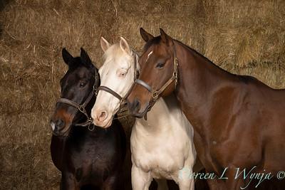 Horse family portrait_133A