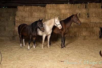 Horse family portrait_119