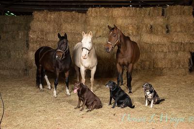 Horse family portrait_112