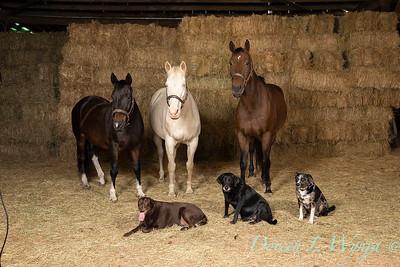 Horse family portrait_114