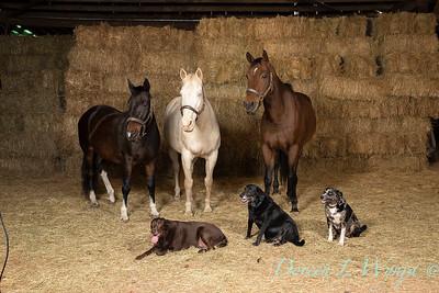 Horse family portrait_113