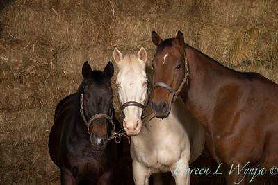 Horse family portrait_132