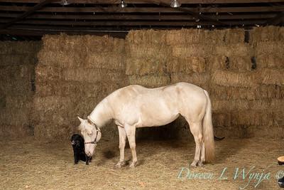 Horse family portrait_136