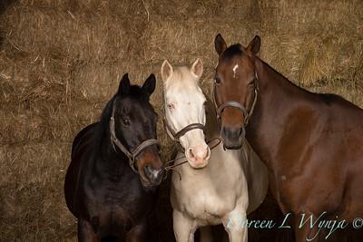 Horse family portrait_131