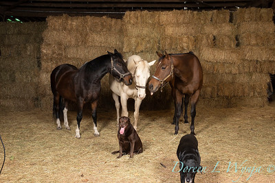 Horse family portrait_116