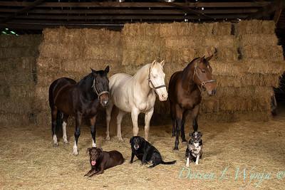 Horse family portrait_108