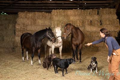 Horse family portrait_111