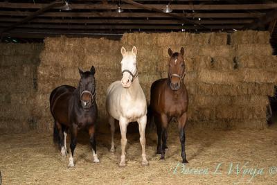 Horse family portrait_125