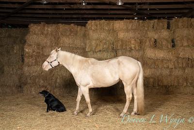 Horse family portrait_137