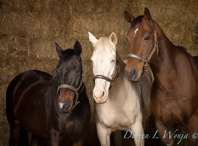 Horse family portrait_122