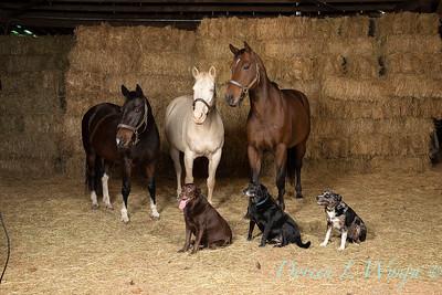 Horse family portrait_115
