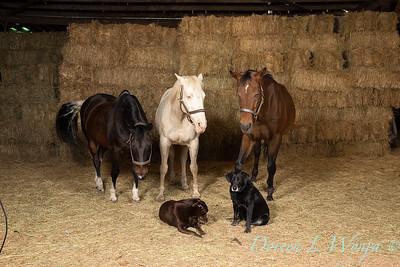 Horse family portrait_117