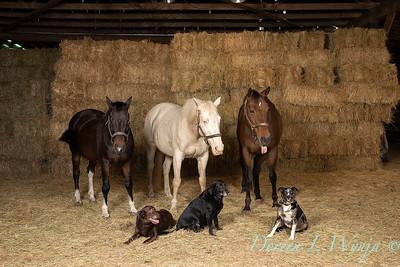 Horse family portrait_109