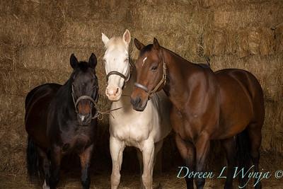 Horse family portrait_130