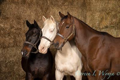 Horse family portrait_133
