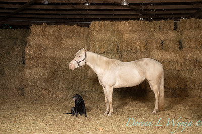 Horse family portrait_134