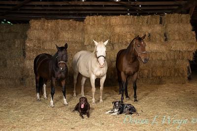 Horse family portrait_107