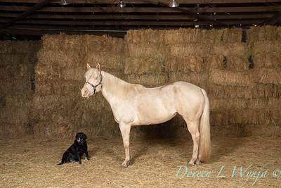 Horse family portrait_135