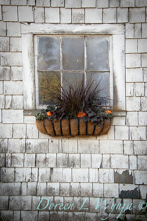 Build a fall window box - How to_7373