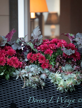 Sedum - Heuchera - Mum fall filled railing box_7381