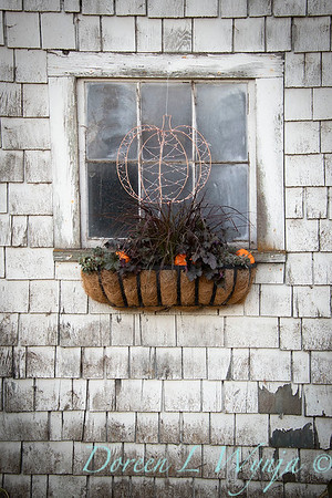 Build a fall window box - How to_7374