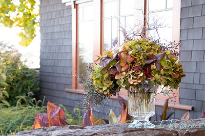 Corokia - Hydrangea fall color vase_7338