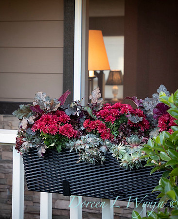 Sedum - Heuchera - Mum fall filled railing box_7380