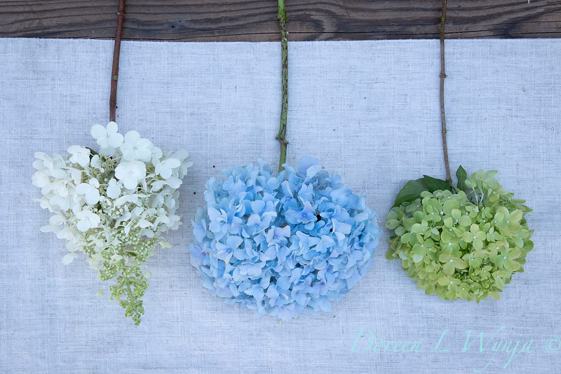 Hydrangeas arrangement on linen_2167