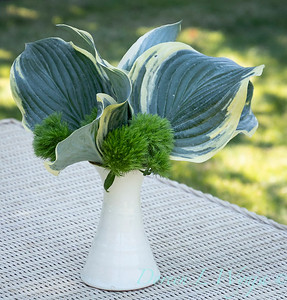 Hosta - Dianthus arrangement_2188