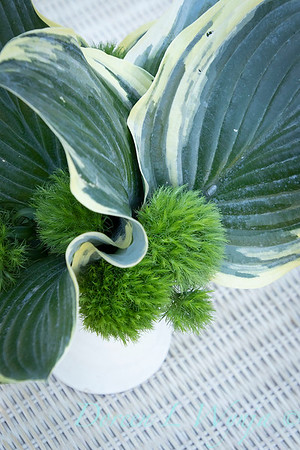 Hosta - Dianthus arrangement_2190