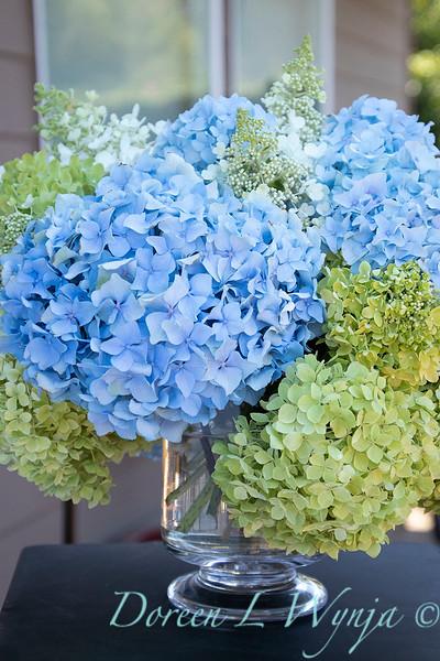 Hydrangeas in a vase_2166
