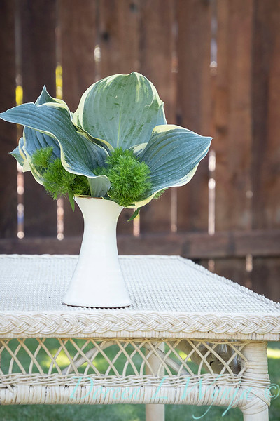 Hosta - Dianthus arrangement_2194