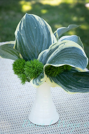 Hosta - Dianthus arrangement_2191