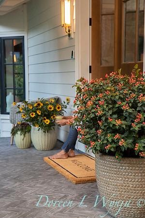 41805 Hypericum x inodorum 'KOLPINOT' FloralBerry Pinot front door_1243