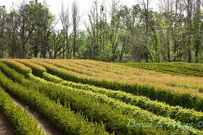 InstantHedge growing fields_5574