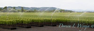 Can Yard Sprinklers_4710