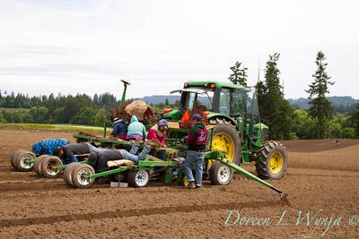 Planting_4718