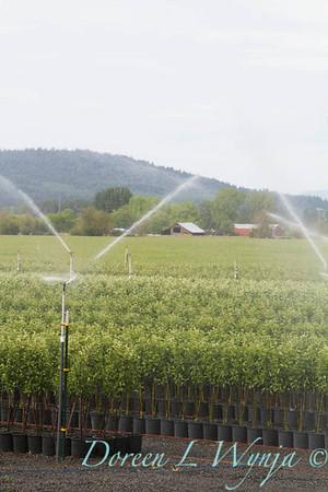 Can Yard Sprinklers_4706