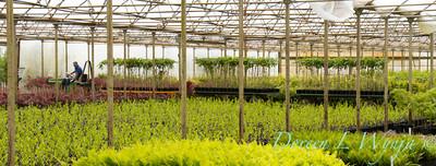 Greenhouse moving plants _9921